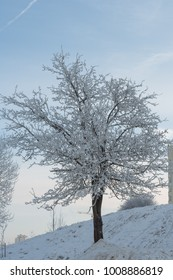 Tree in winter covered with elegant snow