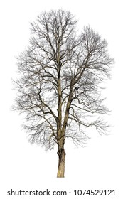Tree in winter, isolated photo. Tree without leaves