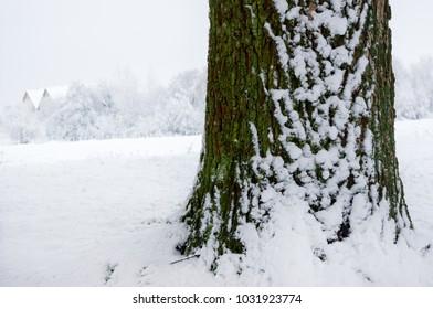 Tree in winter season