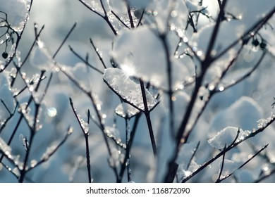 Tree in winter with snow