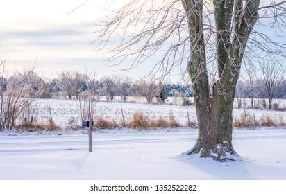 Tree in Winter Snow