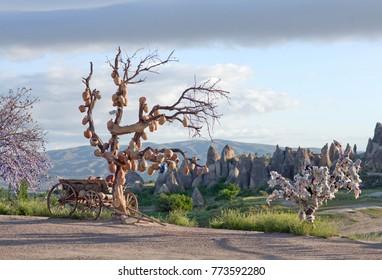 Tree Of Wishes in Goreme, Cappadocia, Central Anatolia, Turkey