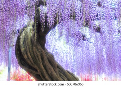 Tree of wisteria to be able to twist