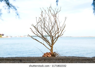 Tree without care until dry die, making nature damage, concept that lack of care, lack of attention and caused considerable damage