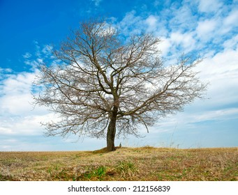 tree without leaf in the field