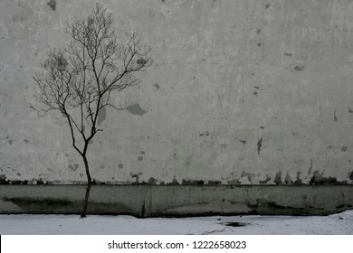 Tree without leaves by the wall of the house