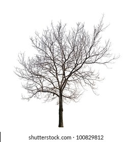 Royalty Free Tree Without Leaves Images Stock Photos Vectors
