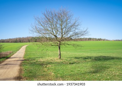 Tree without leaves on green meadow with blue sky