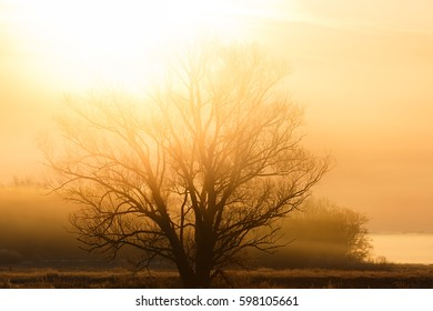 A tree without leaves in the rays of the rising sun. The forest is in a fog.