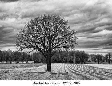 Tree without leaves with round crown on a harvested field, in the background a forest area, sky with cloud structures, black and white version - Location: Saxony, Germany