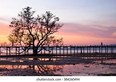 Tree and Wood Bridge on the Beach at Twilight,  Koh Mak, Trad Province, Thailand