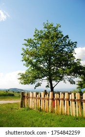 A tree and a wooden fence in countryside