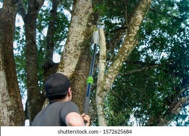 tree worker has cut a large tree limb off with a pole saw - Shutterstock ID 1572625684