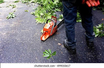Cutting Down Trees Images, Stock Photos & Vectors | Shutterstock