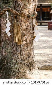 The tree was wrapped by ropes in the Japanese shrine is called Shimenawa, Japan