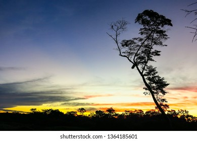 A tree in the Yacuma river, in the Bolivian jungle. Amazon region.