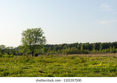 Tree and yellow flowers in a beautiful landscape by spring season at the swedish island Oland