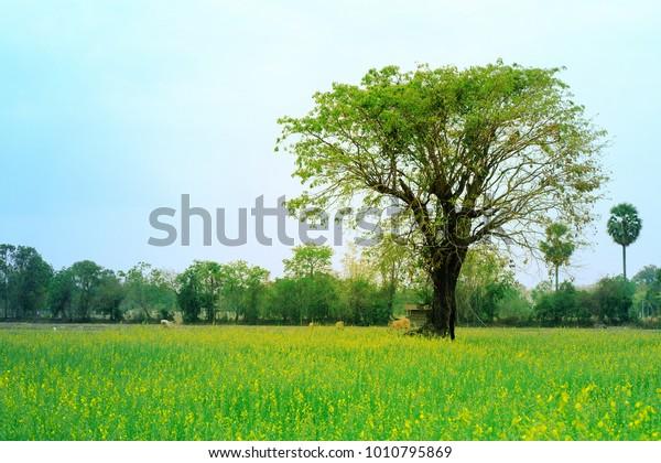 Foto De Stock Sobre Tree Yellow Flowers Field Nature