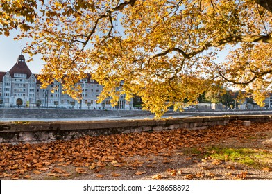 A tree with yellow foliage in a park of Besançon