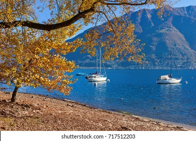 Tree with yellow leaves on lakes hore of famous Lake Maggiore with yachts on blue water in Locarno, Switzerland.