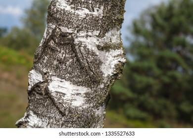 Treebark in nature