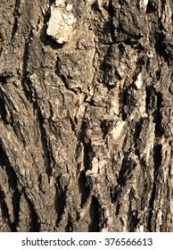 Tree-bark-dry-view-close-up