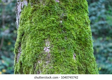 treee bark cover with moss