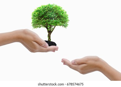 Tree-hand sent to volunteer hand to plant to adjust the ecological balance.
