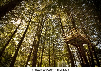 Treehouse Amongst Tall Trees