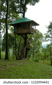 Treehouse in National park