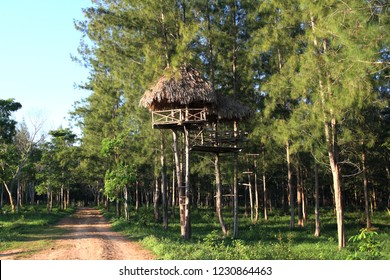 Treehouse for watch the wild animals in the forest, Treehouse for hunter in the forest.