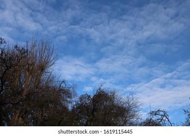 Treeline against alto cumulus clouds in a blue sky
