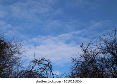 Treeline against blue sky with white clouds