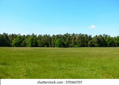 Treeline behind a summer field.