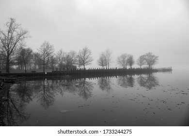 Tree-line pier on a foggy day