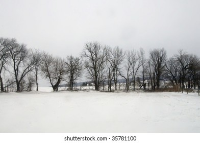 treeline in wintertime