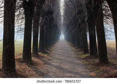 tree-lined avenue in the Lura - Lomazzo park