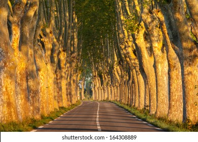 Tree-lined avenue at sunrise, near small town Apt, Vaucluse, Provence, France