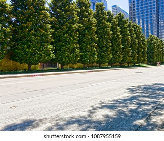 Tree-lined boulevard in the downtown central business district of Dallas, Texas, in the summertime