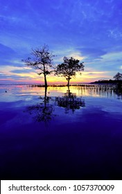 A tree-lined landscape with blue skies when sunset at Kelanang Beach, Banting, Selangor, Malaysia.