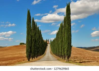 Treelined road near Val D'Orcia, Tuscany, Italy - 26th September 2016