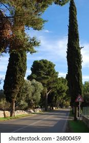 The Tree-Lined Road from Polignano a Mare to Castellana, Bari, Apulia, Italy