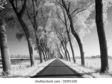 A tree-lined road through farmland in Damme, Belgium. Shot on Infrared Film (known for high-grain) and drum scanned.