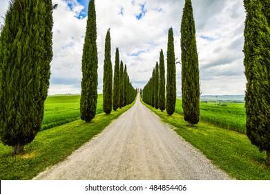 Tree-lined road, Tuscany countryside