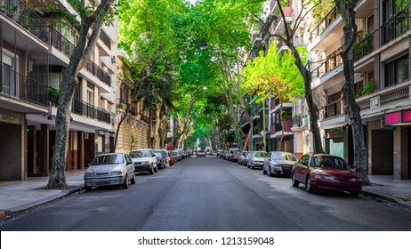 Tree-lined Street in the Recoleta Neighborhood of Buenos Aires, Argentina