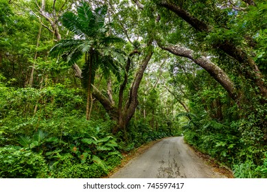 Tree-lined walk at  Cherry Tree Hill Reserve - caribbean island Barbados