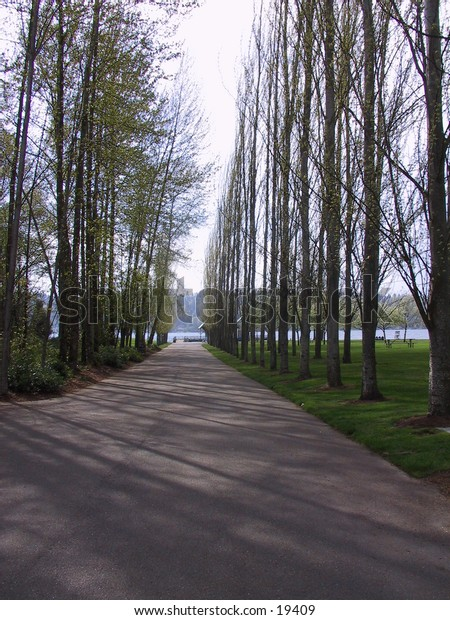tree-lined walk to the lake
