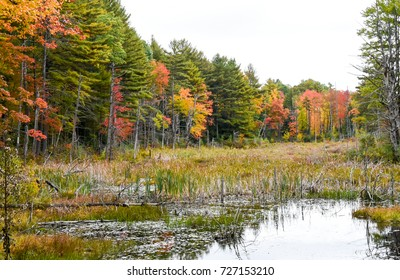 Trees ablaze with fall colors wind around the edge of a shallow pond/wetland area. Reds, orange, goldenrod and green fill your eyes with color!