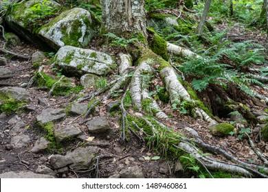 Trees adapting to harsh living environment