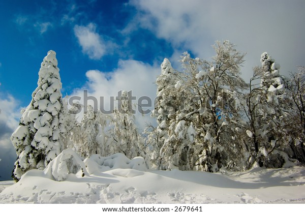 Trees after snowstorm